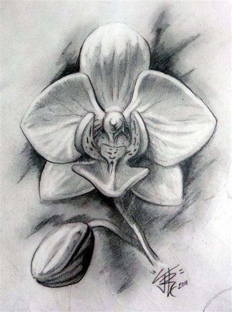 orchid in graphite by sirius tattoo on deviantart