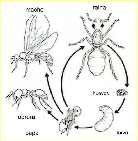 cadena trofica hormigas biota colombiana david leonardo torres ramos hormigas