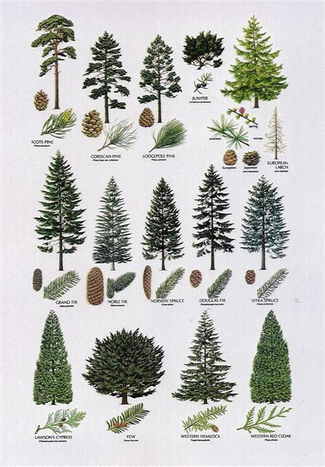 types of trees 8 proximity the elements different types of trees are