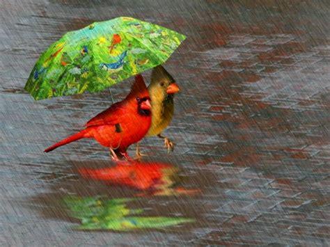 images of love birds in rain happy little birds in the rain love birds pinterest