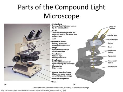 what is a compound light microscope microscopy and cytology ppt