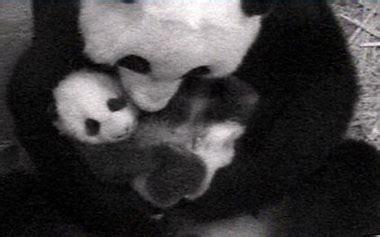 imagenes de viboras extrañas nuevas crias foro basta de opresion