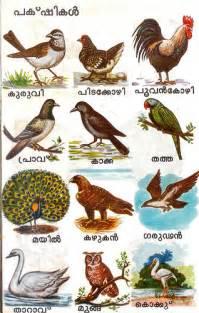 bird names malayalam flickr photo sharing