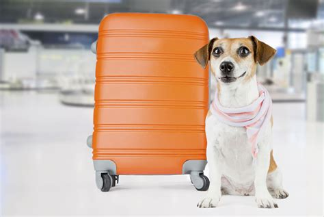 Book Your Travel To Dreamland Pet Pet Pet Product 2 by Travelling With Pets Are Dreamandtravel