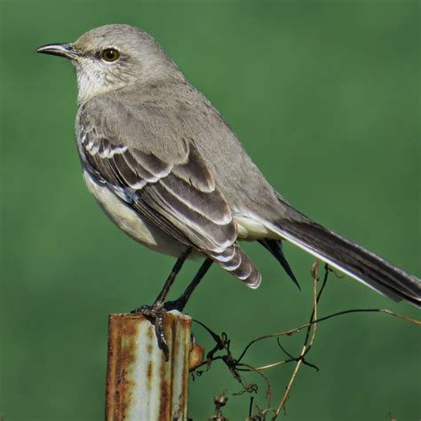 florida suncoast birding tallahassee birding