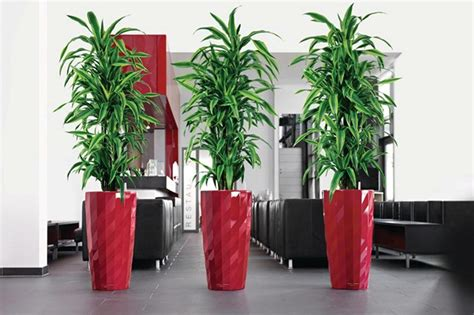 best tall indoor plants tall house plants for indoor the most recommended ones