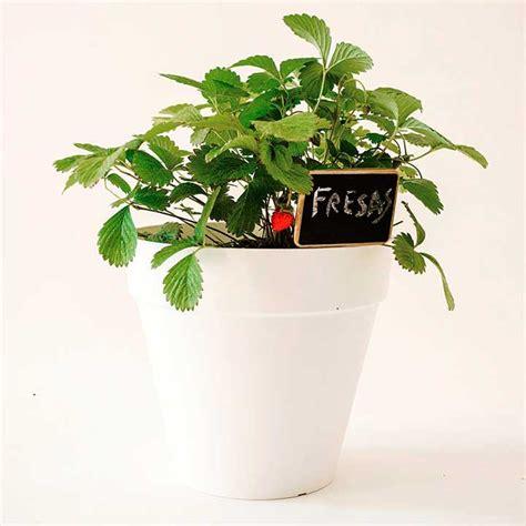 que plantar en casa plantea blog c 243 mo plantar fresas en casa y en el huerto