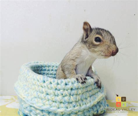 knitting for wildlife nidi a maglia o a uncinetto come salvare cuccioli di