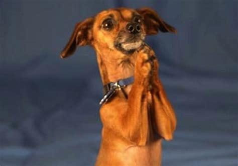 puppy praying pet shop maxpetshop kατάστημα ειδών για κατοικίδια το