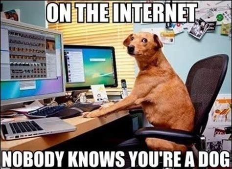 Internet Dog Meme - is your vpn legit or shit deep dot web