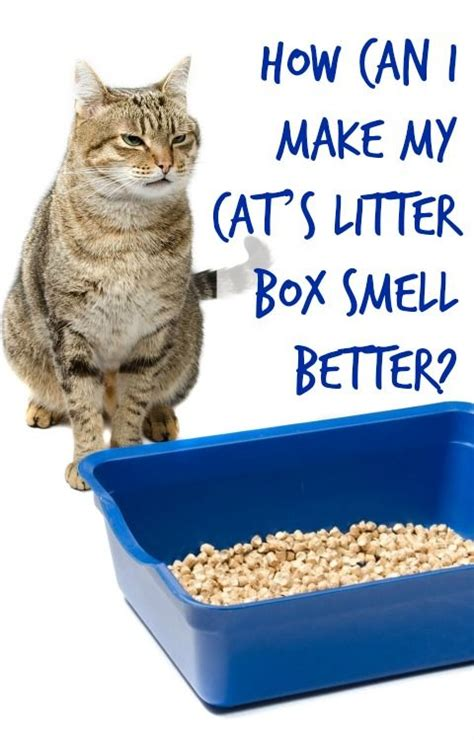 how to make couch smell better best 25 litter box smell ideas on pinterest litter box