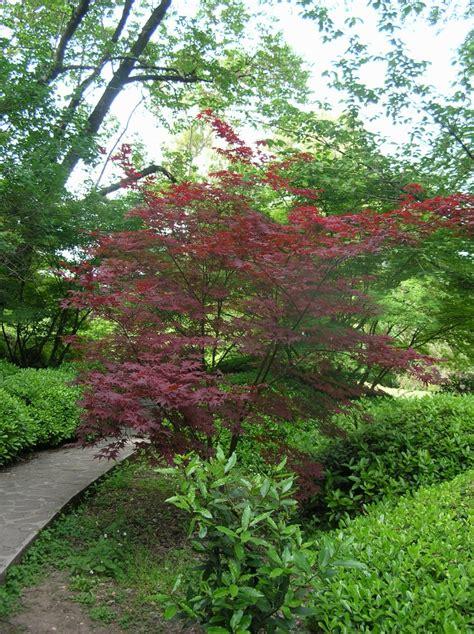 botanical garden japan botanical gardens of rome japanese garden japanese gardening
