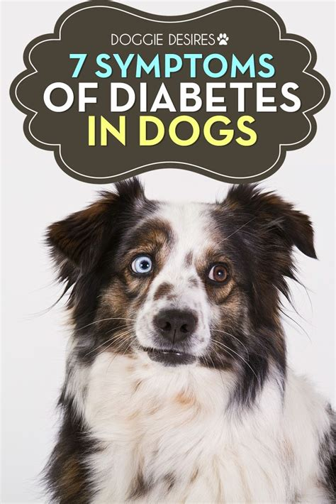 diabetes in dogs 6939 best images about pet products projects safety and