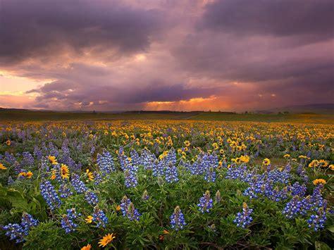 foto indahnya pemandangan alam