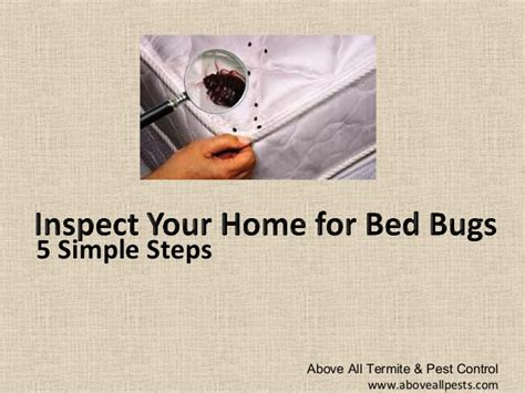 how to tell you have bed bugs 5 tips to determine if you have bed bugs new jersey pest