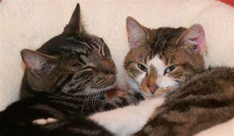 nieuwe kat in huis licg nl kennismaken met andere katten en honden