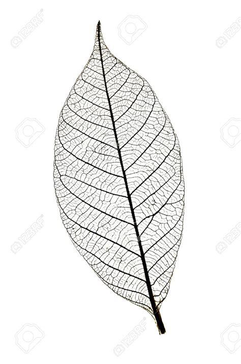 printable skeleton leaves leaf skeleton google search leaves pinterest leaf