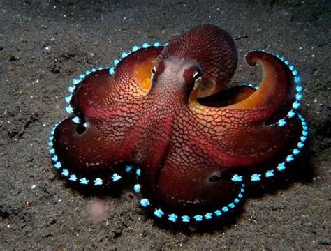octopus pets octopus pet ownerâ s manual octopus book for pros and cons tank keeping care diet and health books octopus inspirations in modern interior design and home decor