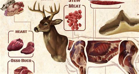 butchering a deer diagram this diagram makes butchering a deer much easier