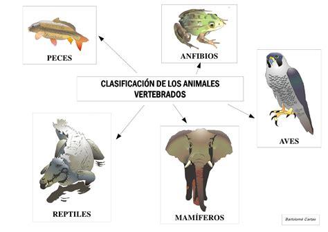 los animales vertebrados murales animales vertebrados comunidades aut 243 nomas