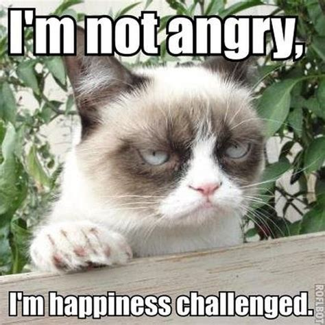 Funny Cat Memes - 21 grumpy cat memes you can relate to every monday of your