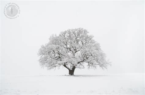 snow tree snow day in bristol an edr photography