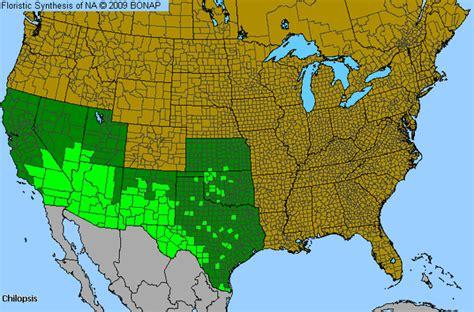 texas desert map desert willow chilopsis genus level details allergy info wilson county texas