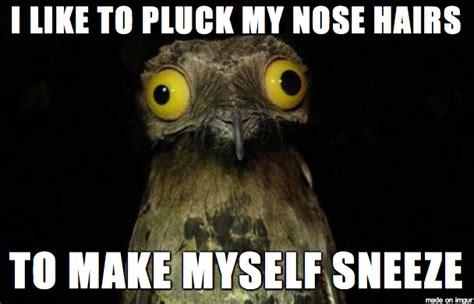 Potoo Bird Meme - weird stuff i do potoo meme www pixshark com images