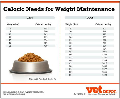 weight management for dogs an in depth look at weight management for pets vetdepot