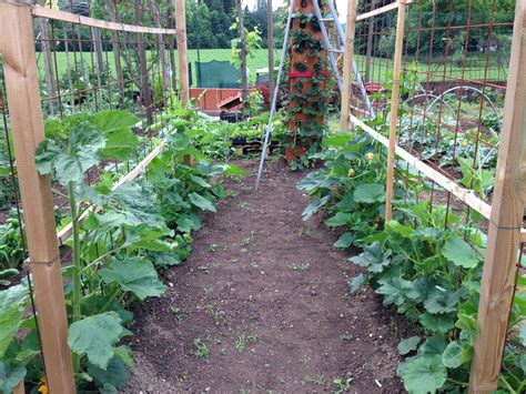 pumpkins trellis the pumkins grow grow up garden and