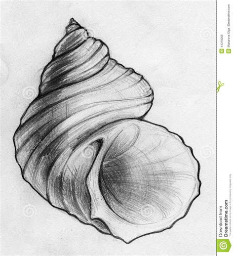 Done Sea Shell Sketch Stock Illustration   Image: 44318008   art   Pinterest   Shell, Sketches