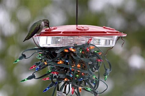 heated hummingbird feeder gnewsinfo com