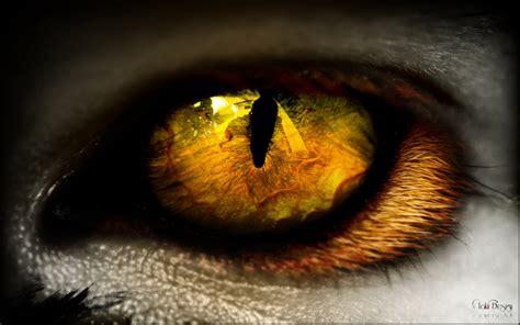 C C T The Eye Of The animal eye by takiidesign on deviantart