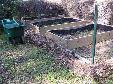 pressure treated wood for raised beds florida gardening zone 9 three 4 x 8 raised beds