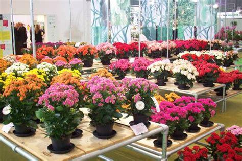 peluang usaha tanaman hias  analisa usahanya agrowindo