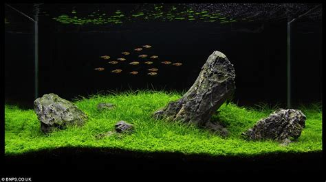 Japanese Aquascape Artist by Zen And The Of Fish Tank Maintenance Aquascapers Herald The End For Treasures Chests And
