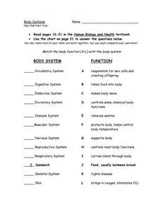 19 best images of organ system worksheets high