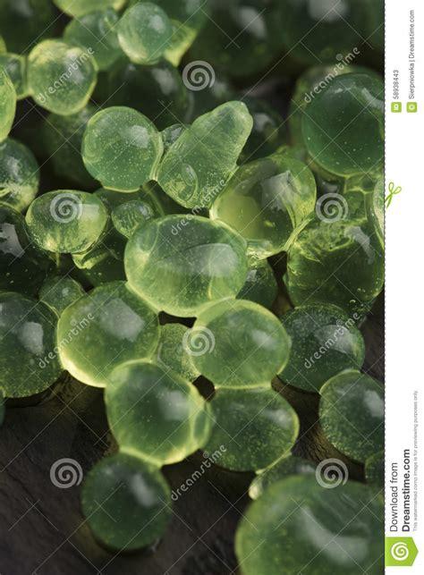 Caviar Mint Green mint caviar molecular gastronomy stock image image of