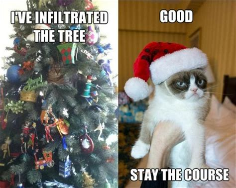 grumpy cat funny christmas pictures1 clicky pix
