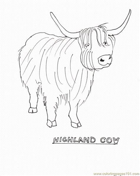 Highland Cow Coloring Page | highland cow coloring pages coloring pages