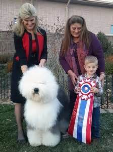 kennels colorado springs colorado springs kennel club monday november 9 2015 canine chronicle