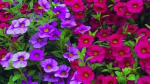 how to grow flowers easy to grow annuals with low maintenance by smiths country gardens youtube