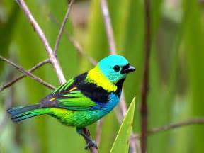 colorful birds small birds wallpapers entertainment only