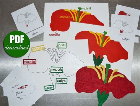 digital printable     montessori botany