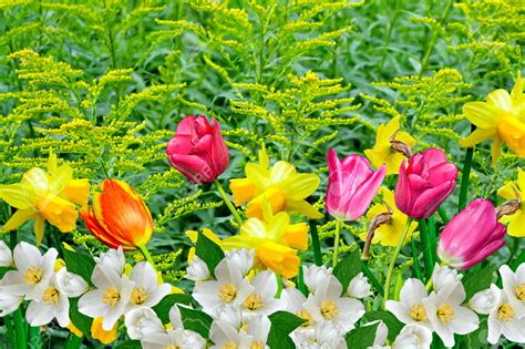 photos of spring flowers pictures of spring flowers collection for free download