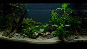 How To Make An Aquascape Easy Aquascaping Youtube