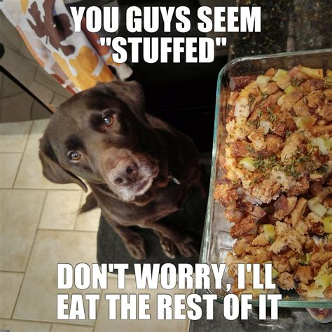 Chocolate Lab Meme - image tagged in chuckie the chocolate lab thanksgiving