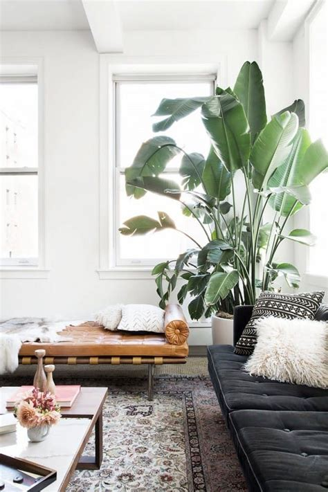 biggest house plants large indoor trees that make a bold statement big plants