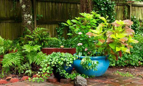 arbusti sempreverdi da terrazzo piante sempreverdi 10 piante che dureranno per sempre leitv