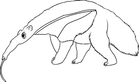 anteater coloring child coloring